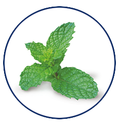 Xylitol Chewing Gum Spearmint