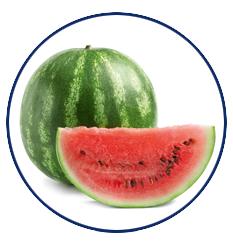 Xylitol Chewing Gum Wassermelone