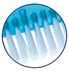 Protho Brush